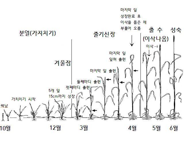 밀성장단계.JPG