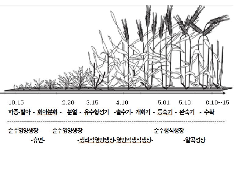 밀의성장.png