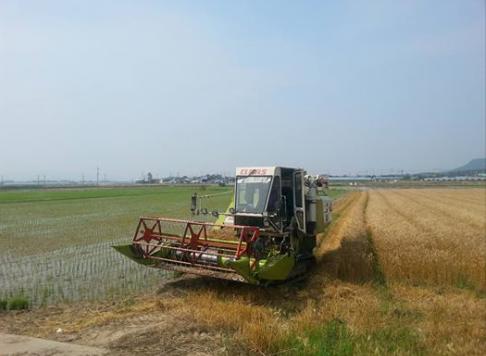 밀수확.png